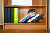 Kitten sleeping on bookcase — Stock Photo