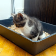 Stock Photo: Cat dispose in litter box