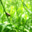 Stock Photo: Bug on grass