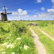 Dutch windmill in fresh green field in summer — Stock Photo