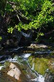 Bir nehir, taşlar ve yeşil yaprak — Stok fotoğraf