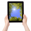 Royalty-Free Stock Photo: Hand Holding Digital Tablet with sky and trees