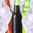Bottle of beer is in ice — Stock Photo