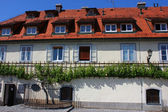 House of the oldest vine, Maribor, Slovenia — Stock Photo