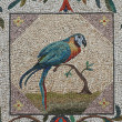 Stock Photo: Parrot mosaic - Vaticgardens, Rome