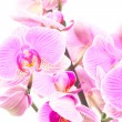 Some Orchids — Stock Photo