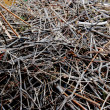 Stock Photo: Brushwood