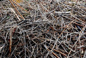 Brushwood — Stock Photo