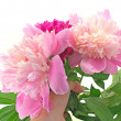 Stock Photo: Bouquet Peony Flowers in hand on white background