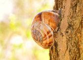Snail sitting on tree — Stock Photo