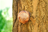 Snail hidden on tree wooden in forest — Stock Photo