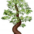 Ficus Bonsai — Stock Vector