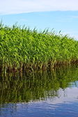 Reflection of grass — Stock Photo