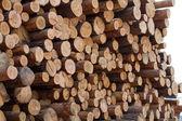 Logs in stock sawmill — Stock Photo