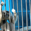 Sad monkey sit in cage — Stockfoto