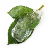 Leaf in ice — Stock Photo