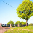 Picture trees — Stockfoto