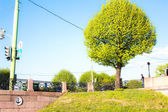 Picture trees — Stock Photo