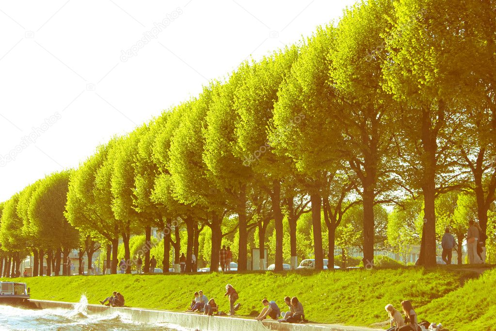 Picture trees, the green alley — Foto Stock #11021546