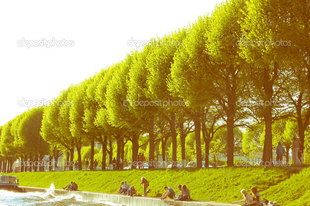 Picture trees, the green alley — 图库照片 #11021546