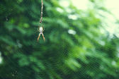 Australian edible golden silk spider — Stock Photo