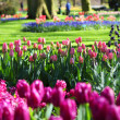 Beautiful blooming spring garden — Stock Photo