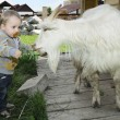 Royalty-Free Stock Photo: Baby feeding a goat