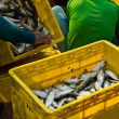 Fishermworkers sorting fishes — Stock Photo #12246829