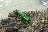 Bericht in de fles — Stockfoto
