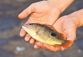 рыбы для вас — Стоковое фото