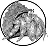 Hermit crab — Stock Vector