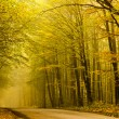 Mysterious road in autumn forest. — Stock Photo
