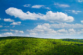 Lovely green forest with blue sky — Stock Photo