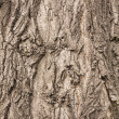 Textured bark of a healthy old tree — Stock Photo