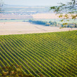 Stock Photo: Vineyard with nearby fields in Palava, Czech