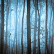 Stock Photo: Dark blue spooky forrest with trees in fog