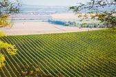 ブドウ畑の palava、チェコの近くのフィールド — ストック写真