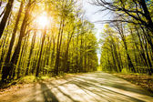 Road in beautiful forest with sun shining through — Stock Photo