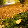 Autumn forest with nearby road. Focus is on leaf. — Stock Photo