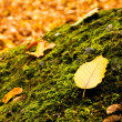 Leaf lying on a moss in autumn — Stock Photo