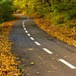 Forest path for cyclists in autumn — Stock Photo