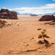 Stock Photo: Small tree in Wadi Rum desert, Jordan.