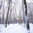 Winter forest with sun behind trees in center - Stock Photo