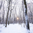 Winter forest with sun behind trees in center — Stock Photo #12038924