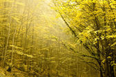 Two layers of trees in an autumn forest. — Stock Photo