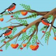 Stock Vector: Bullfinches on mountain ash.