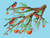 Bullfinches on a mountain ash. — Stock Vector