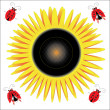 Sunflower and ladybirds. — Imagen vectorial