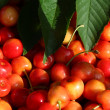 Cherries and leafs — Stock Photo