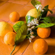 Orange and lemon - Stock Photo